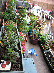 apartment garden, apartment gardening, london rentals, london apartments